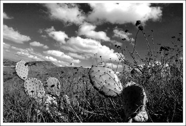 Cactus_hill_3_5_06_014